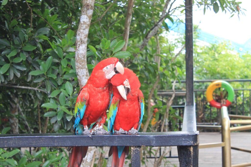 попугаи парк янода