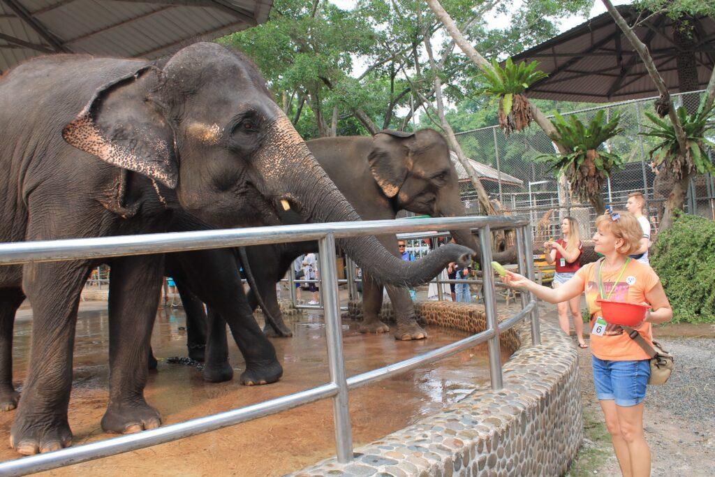 слоны едят
