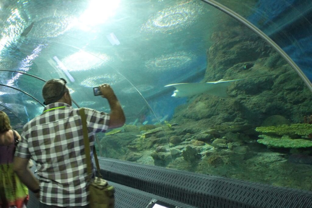 морской скат